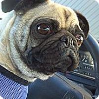 Adopt A Pet :: Joy - Hinckley, MN