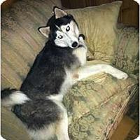 Adopt A Pet :: Coby - Huntington Station, NY