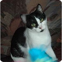 Adopt A Pet :: Luna Bug - Chula Vista, CA