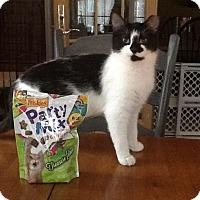 Adopt A Pet :: Sofie and Willie - Portland, ME