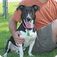 Adopt A Pet :: Pepper - Hagerstown, MD