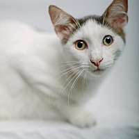 Adopt A Pet :: McConaughey (Courtesy Post) - St. Louis, MO