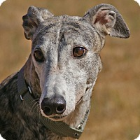 Adopt A Pet :: Anchovy - Portland, OR