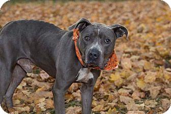 Terrier (Unknown Type, Medium) Mix Dog for adoption in Flint, Michigan - Logan *