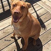 Adopt A Pet :: Branson - Nashville, TN