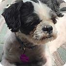 Adopt A Pet :: Kevin aka 'Kev'