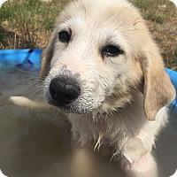 Adopt A Pet :: Captain Hook - Kyle, TX