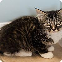Adopt A Pet :: Hilda $75 - Seneca, SC