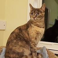 Adopt A Pet :: Hissy Fit - Waxhaw, NC