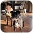 Photo 3 - Boxer Dog for adoption in Rosemount, Minnesota - Molly