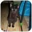 Photo 2 - Domestic Shorthair Kitten for adoption in Cedar Creek, Texas - Einstein