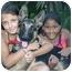 Photo 2 - German Shorthaired Pointer Puppy for adoption in Los Angeles, California - Liesel von Leipzig