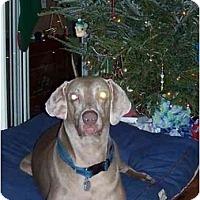 Adopt A Pet :: Charlie - Eustis, FL