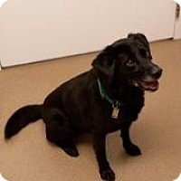 Adopt A Pet :: Lucy - Novelty, OH