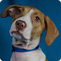 Adopt A Pet :: Ever - Minneapolis, MN
