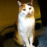 Adopt A Pet :: Tanya - New York, NY