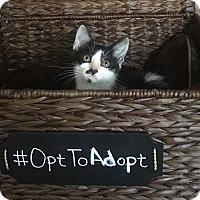 Adopt A Pet :: Charlie - Mosheim, TN