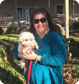 Maltese Mix Dog for adoption in Sharon Center, Ohio - Bobo