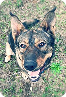Shepherd (Unknown Type) Mix Dog for adoption in Prior Lake, Minnesota - Zeus