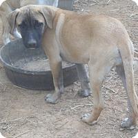 Adopt A Pet :: Baby Girl pending adoption - East Hartford, CT
