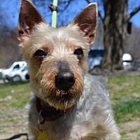 Adopt A Pet :: Charlie - Middletown, NY