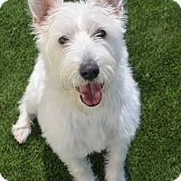 Adopt A Pet :: Obi Wan - Meridian, ID