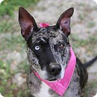 Adopt A Pet :: Cheyanne Woods - Lakeland, FL