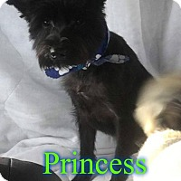 Adopt A Pet :: Princess Bella - Pensacola, FL