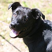 Adopt A Pet :: Clarabelle - Attalla, AL