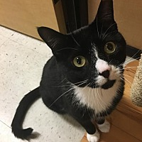 Adopt A Pet :: Cleary, Willow Grove PA (FCID# 05/23/2017-126) - Greenville, DE