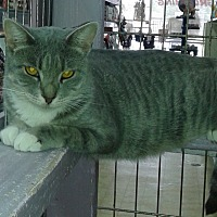 Adopt A Pet :: Tawnia - Whittier, CA
