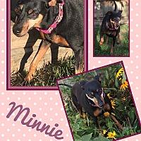 Adopt A Pet :: Minnie - Fort Wayne, IN