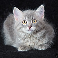 Adopt A Pet :: Miriam - Nashville, TN