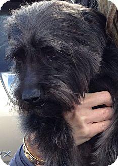 Terrier (Unknown Type, Medium) Mix Dog for adoption in Thousand Oaks, California - Jimi