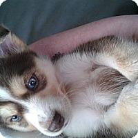 Adopt A Pet :: 7 Babies! - Wadsworth, OH