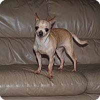 Adopt A Pet :: Rosa - tiny! - Toronto/Etobicoke/GTA, ON