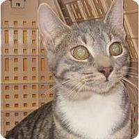 Adopt A Pet :: Zena - Bayonne, NJ
