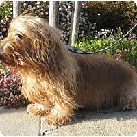 Adopt A Pet :: Miguel - San Jose, CA
