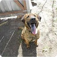 Adopt A Pet :: Dakota - Alliance, NE