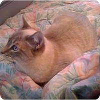 Adopt A Pet :: Ela - Little Rock, AR