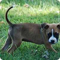 Adopt A Pet :: Simba - Providence, RI