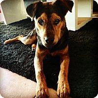 Adopt A Pet :: Skip - Miami, FL