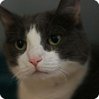 Adopt A Pet :: Stella - Canoga Park, CA