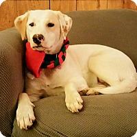 Adopt A Pet :: Celie - Naugatuck, CT