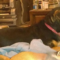 Adopt A Pet :: Rufus - Tonopah, AZ