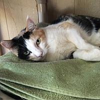 Adopt A Pet :: Sarah - Temecula, CA