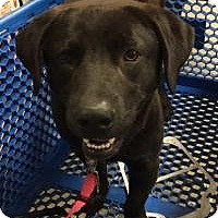 Adopt A Pet :: Simon - Irmo, SC