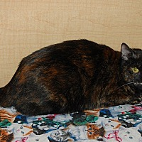 Adopt A Pet :: Sonia - Whittier, CA