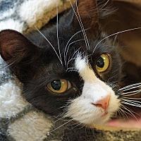 Adopt A Pet :: Gabby - Sprakers, NY