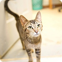 Adopt A Pet :: Ticky - Schererville, IN